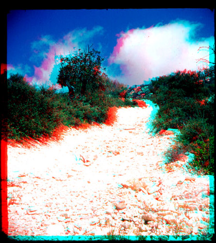 trees film 3d track path cyprus slide anaglyph scan dirt stereo dust fujichrome 3dglasses paphos wraystereographic