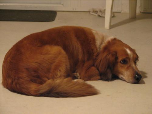 2758427093 00377c18d1 Nice Dog Sports photos