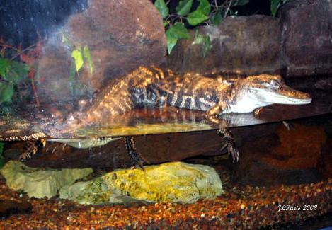 Minnesota Mall Of America Aquarium Gators Flickr Photo