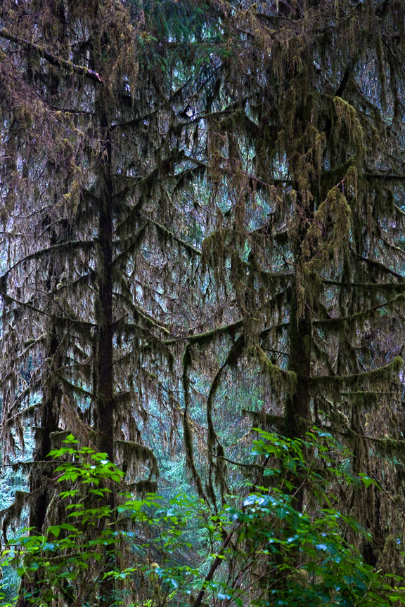 Hoh Rainforest 1