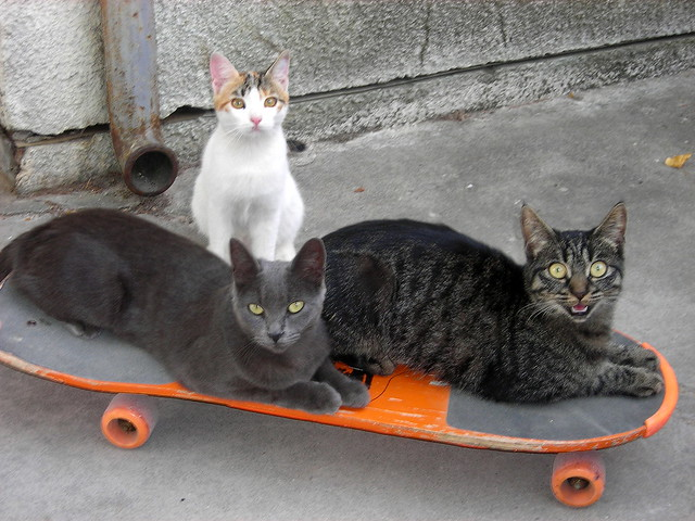 Skate cats
