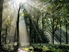 Light in the Forest by algo