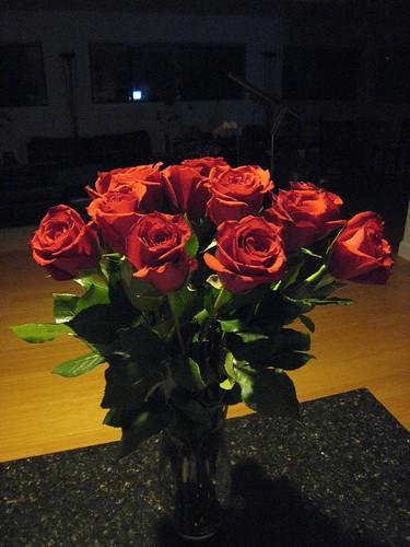 roses, long stem roses, red, flower IMG_6747