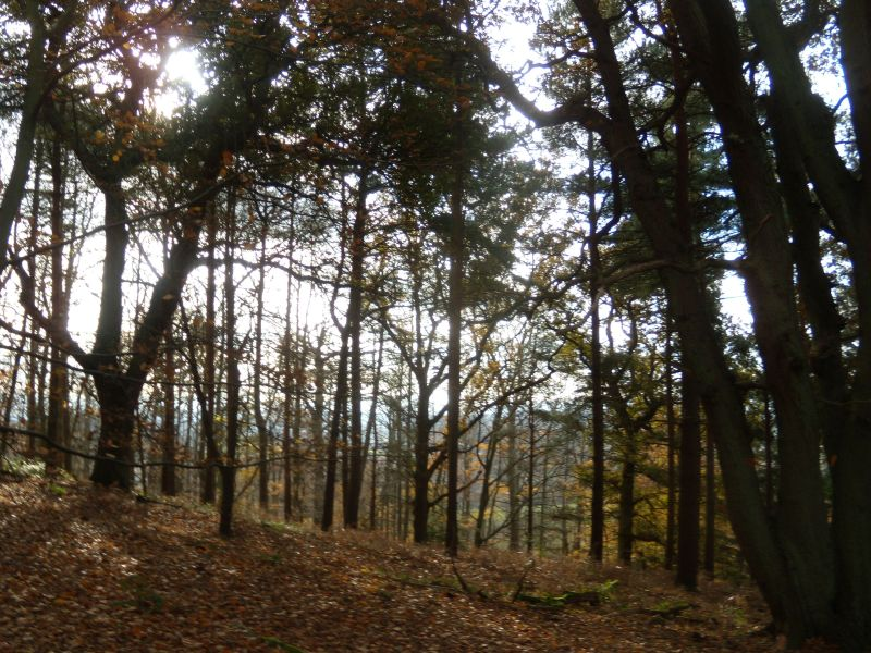 Trees Guildford Circular via Chantries Hill
