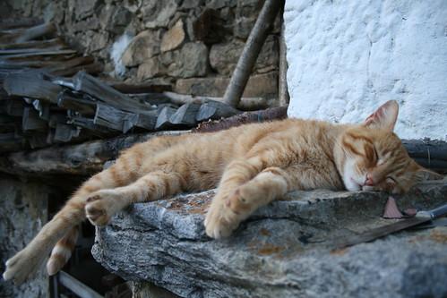 Durmiendo a la bartola