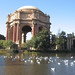 Ducks in front of the Palace of Fine Arts