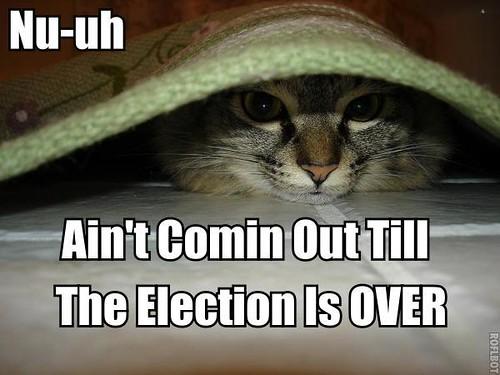 Election Cat