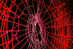 Spider and Spider Web Project 039