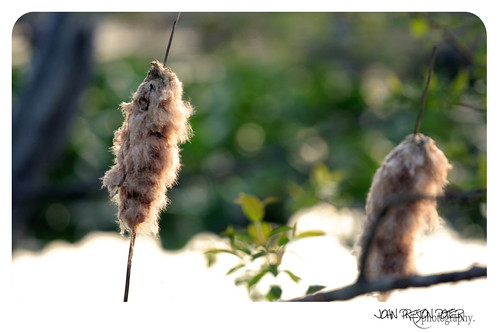 ohio usa reeds cuyahogafalls cuyahogavalleynationalpark beaverpond