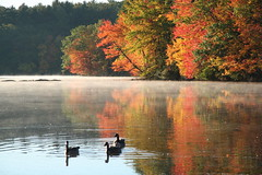 Hager Pond Geese