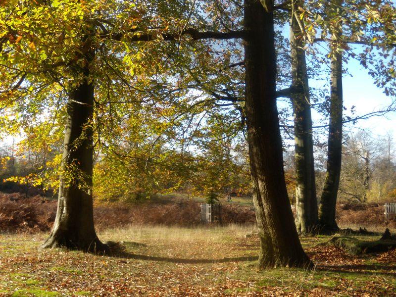 Trees, Knole Park Sevenoaks Circular