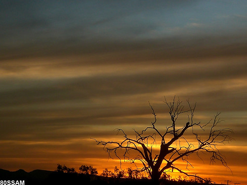 sunset sky tree clouds mexico arbol atardecer hill cerro zacatecas lonely naturesfinest