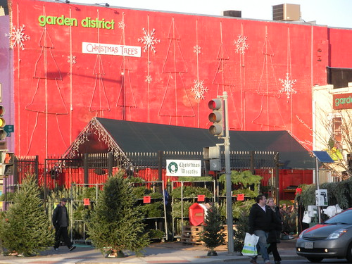 Popville Dear Pop Where Do You Get Reasonably Priced Christmas Trees
