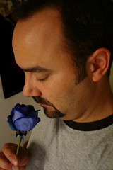 Day 003 : Blue Rose
