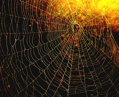 Spider and Spider Web Project 498
