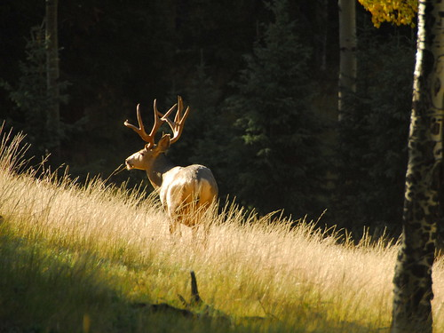 park mountains creek colorado state rocky peak deer pines aspens pikes cripple buck bucks mule divide mueller muley