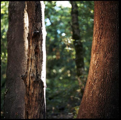 tree 120 film sunshine skyline kodak hasselblad bark trunk portra 400nc castlerockstatepark 120mmcf