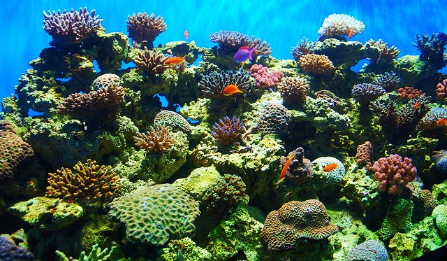 Scripps' Birch Aquarium   Flickr - Photo Sharing!
