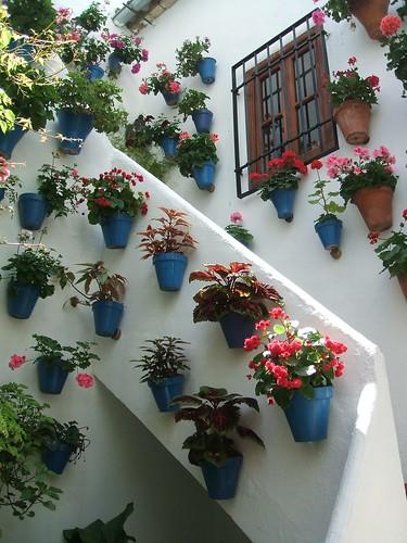 Macetas en escalera de patios cordobeses a photo on - Patios con macetas ...