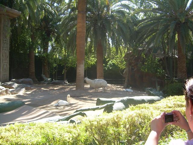 Vegas mirage secret garden and pool flickr photo for Secret garden pool novaliches