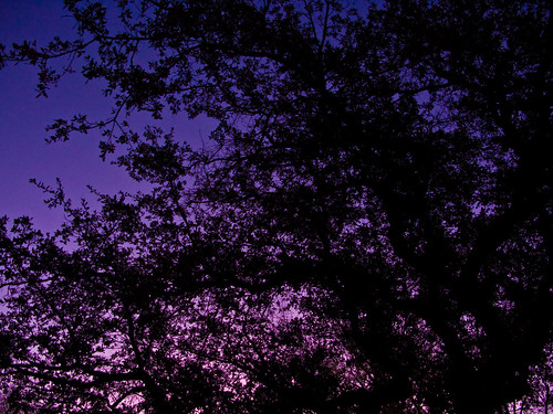 arizona sky tree sunrise purple az prescott prescottpubliclibrary