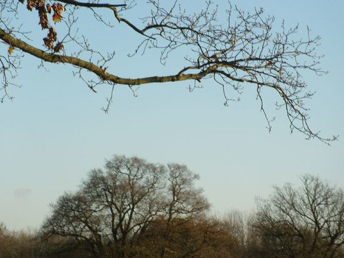 Trees and branch