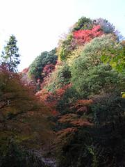 kazusakameyama - 15
