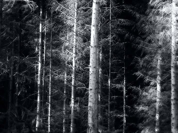 Photography - Tree Shield by Nicholas M Vivian