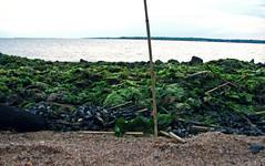 Blanket of Seaweed