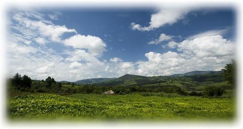 landscape tea hill thee landschap burundi platteland bururi