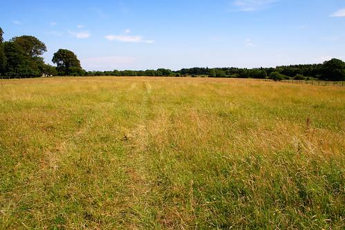 Field in Ballyforan