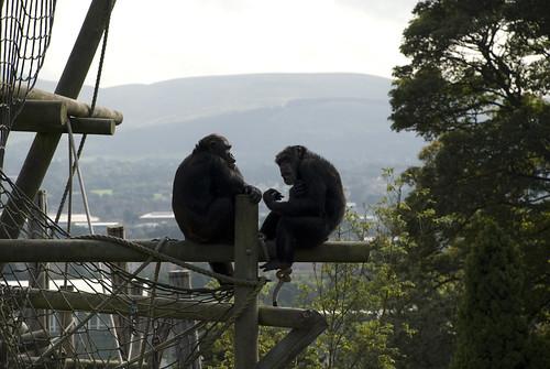 Edinburgh Zoo-25