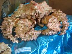 coral(0.0), fish(0.0), marine biology(0.0), dish(0.0), crab(1.0), animal(1.0), seafood(1.0), invertebrate(1.0), king crab(1.0), food(1.0),