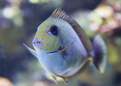 deep sea fish(0.0), reef(0.0), animal(1.0), fish(1.0), coral reef fish(1.0), organism(1.0), marine biology(1.0), macro photography(1.0), fauna(1.0), freshwater aquarium(1.0), close-up(1.0), underwater(1.0),