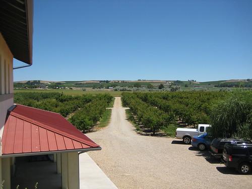 vineyard wine bethany matthias koenigwinery