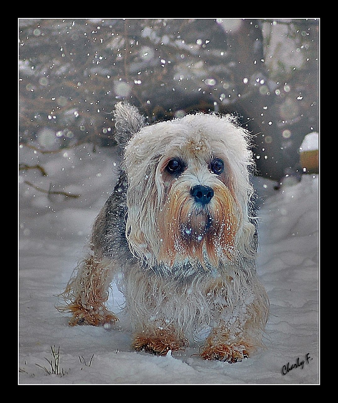 """""""I wouldn't send a dog out in this weather"""" by nature1955"""