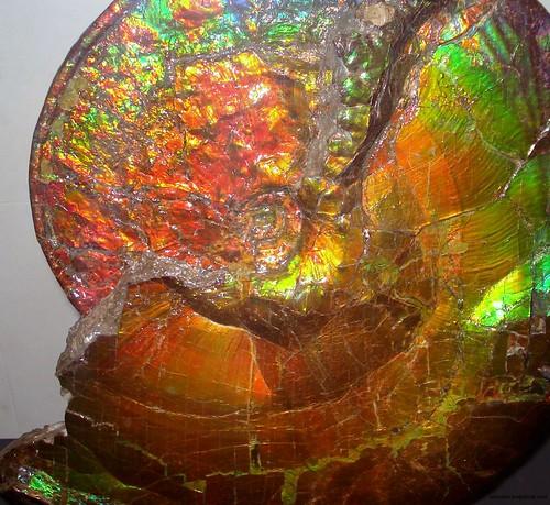 Rainbow Ammonite