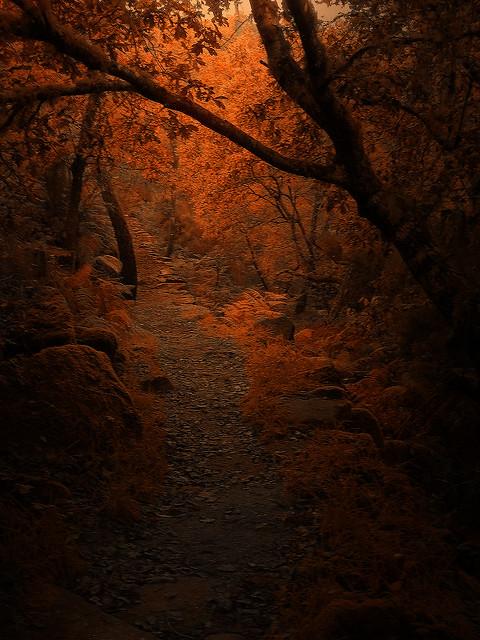 Caminando hacia la luz