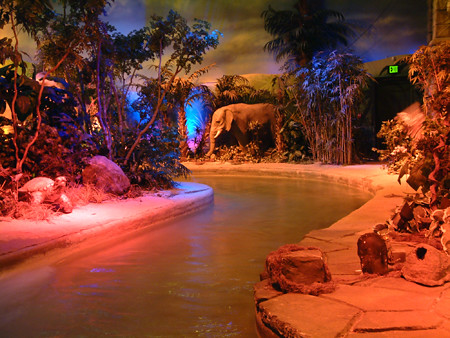Rainforest Cafe Ride Cost