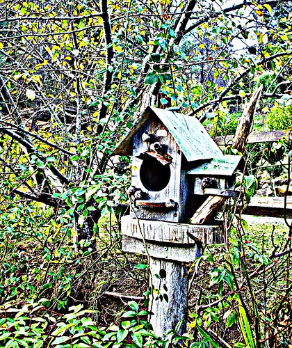 Time for another Birdhouse