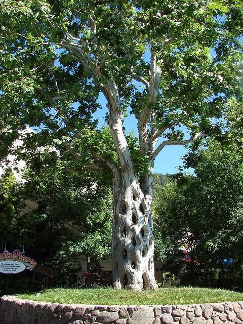 Gilroy gardens california flickr photo sharing for Gilroy garden trees