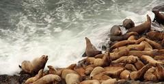 Sea Lion Cave 3a
