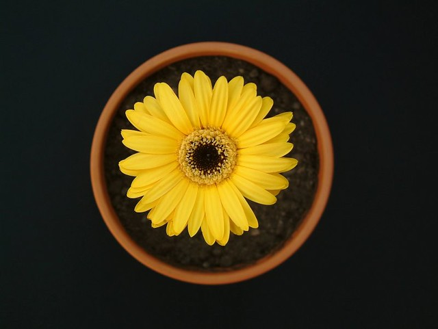 flower from above