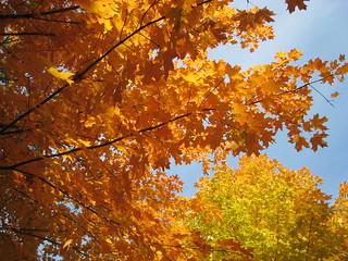 Natural Fall Colors