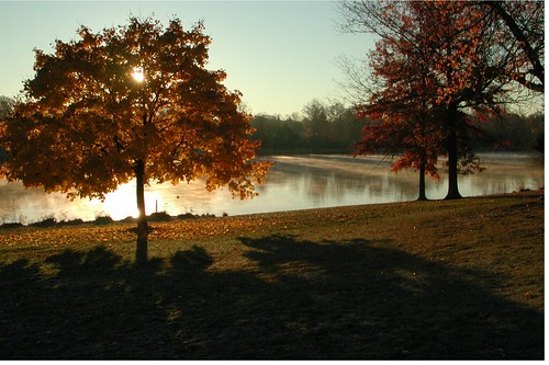 trees fall sunrise newjersey lakes nj greatshot pitman gloucestercounty alcyonlake