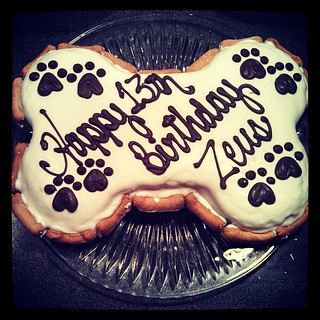 Zeus' Apple Oatmeal #birthday #cake from The Barkery #dogbone #dogstagram #instadog #ilovemydogs