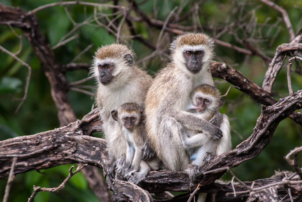 monkey family photo