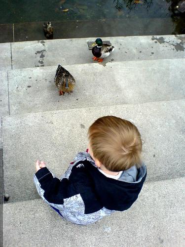 feeding the ducks   DSC00870