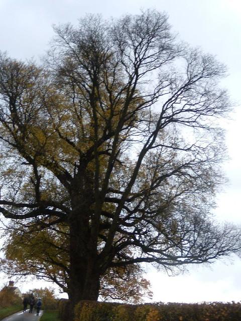 past a big tree