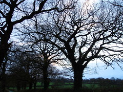 Winter Trees Pikers Lane